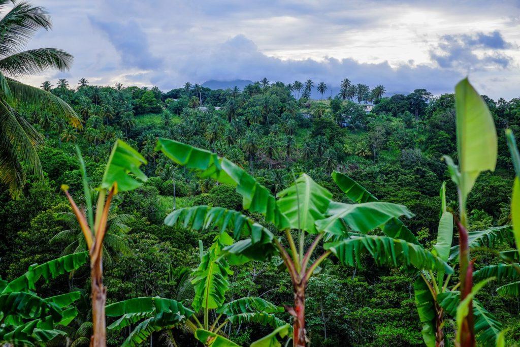 جنگلهای سنت کیتس