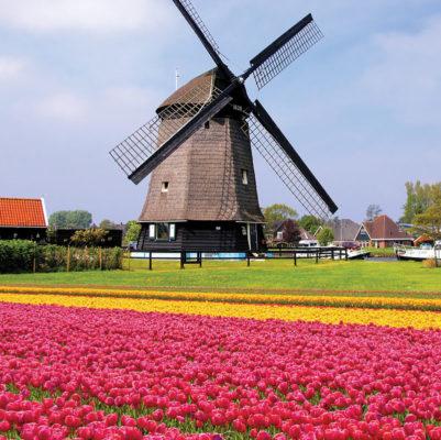 راه های مهاجرت به هلند